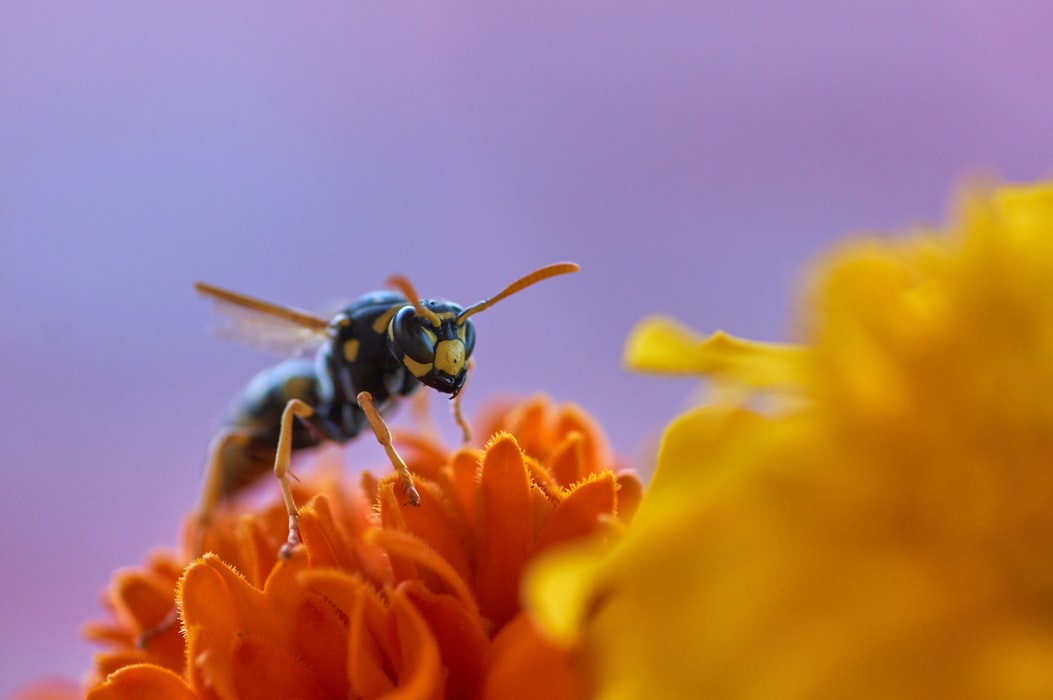 How to Get Rid of Wasps in Your Garden and Stop Them ...